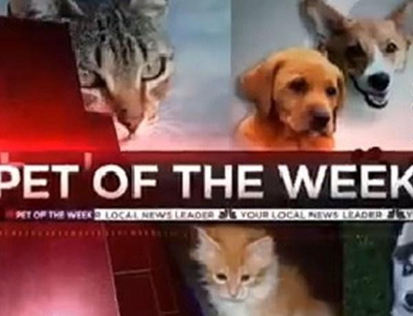 pet of the week_-7037924821215919053