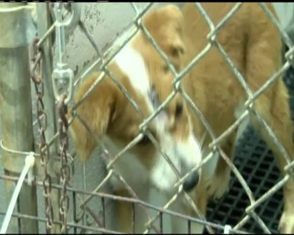 Proposed change to vicious dog ordinance_01495848-159532