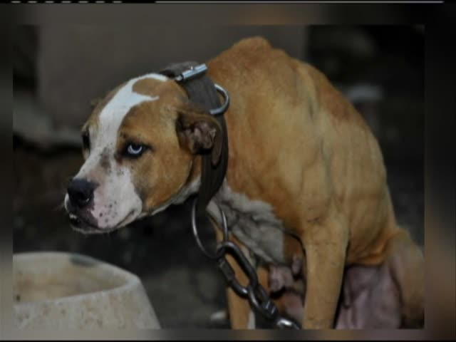 Jefferson County dogfighting ring_67263375-159532