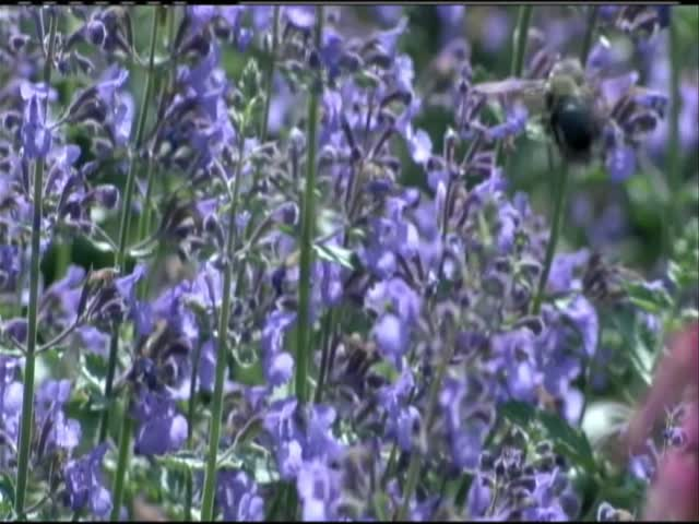 Researchers aim to save gardens_51781561-159532