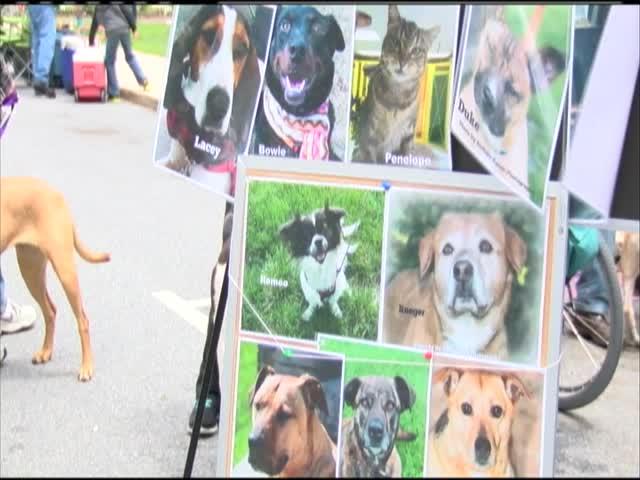 Shepherdstown DogFest_79053302-159532