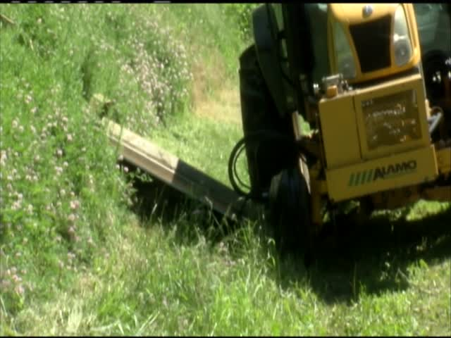 Weeds increase on highways after rain_22236471-159532