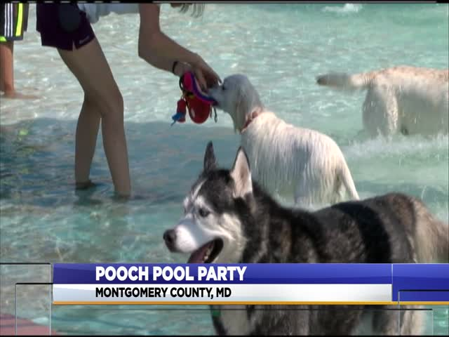 pooch pool party_73356424-159532
