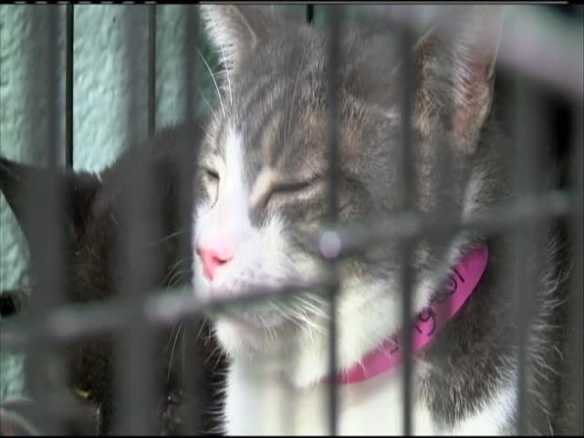 Nearly 100 cats seized from animal rescue_83892314