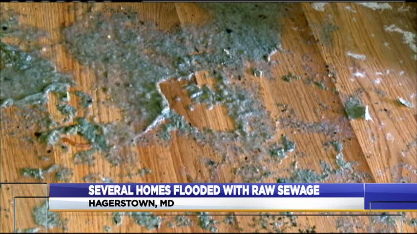 Sewer line backup in Hagerstown_91076423