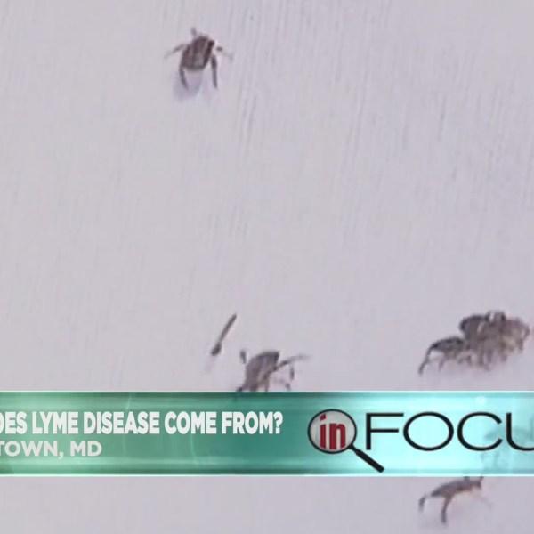 In_Focus__How_Lyme_Disease_is_spread__an_0_20180620200331