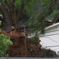 Tree_in_house_0_20180601025612