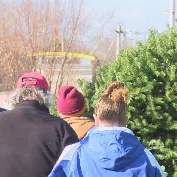 Christmas_trees_0_20181123232223