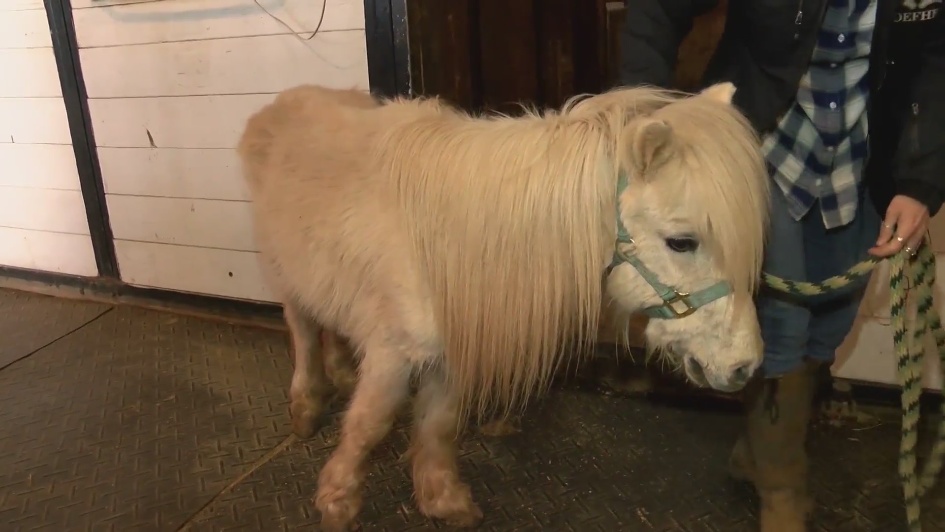 Horse_abuse_0_20181128231356