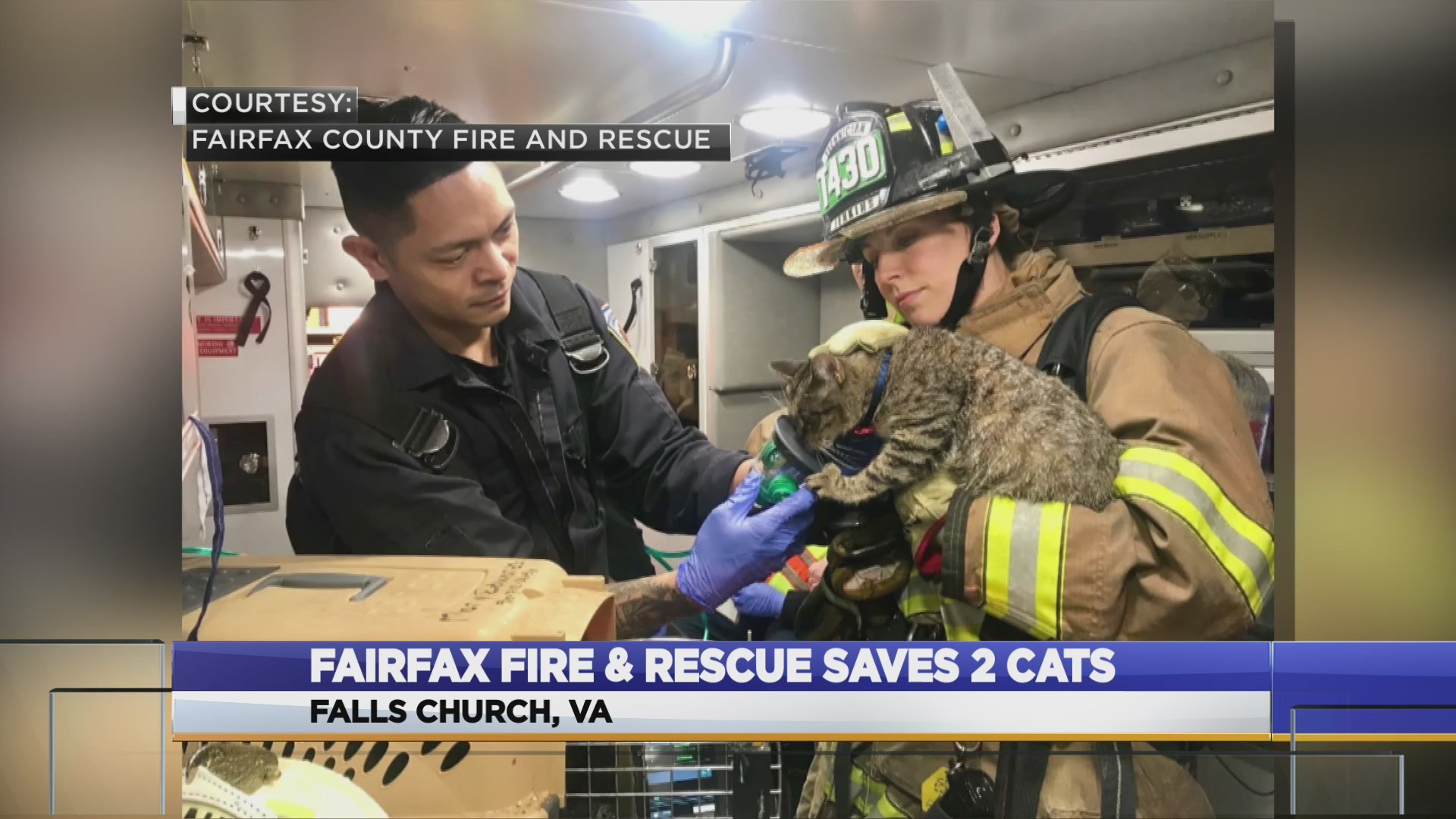 CATS SAVED FROM FIRE