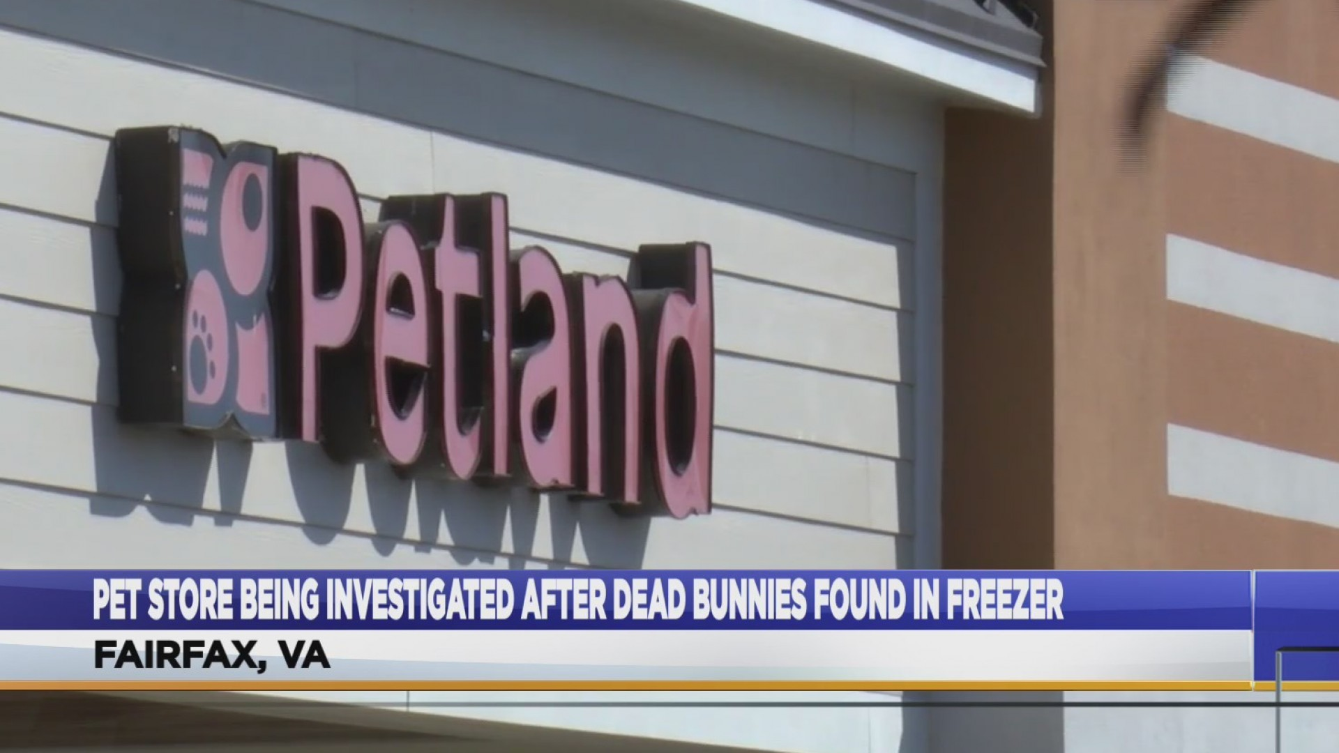 Fairfax's Petland is under investigation after 14 rabbits