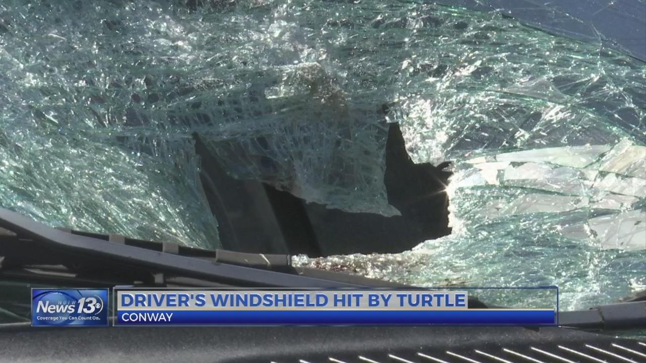 _It_just_flung_into_my_windshield___Turt_0_20190502032110-842137440