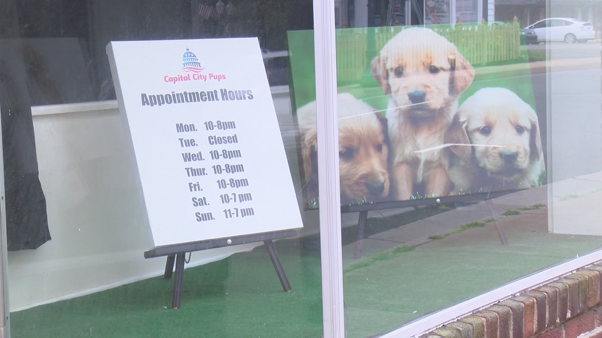 25 puppies seized from Capital City Pups for alleged