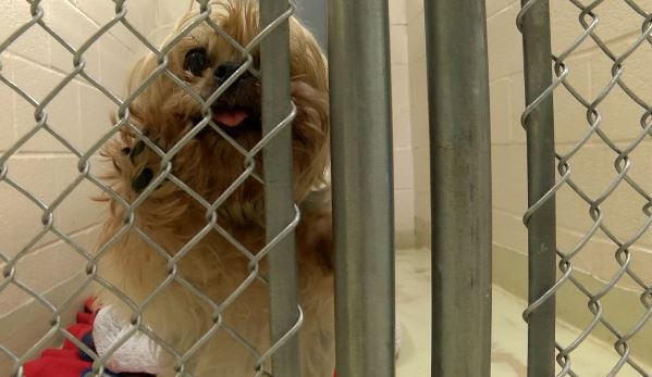 Animal shelter alters policy for owners surrendering pets | WDVM 25