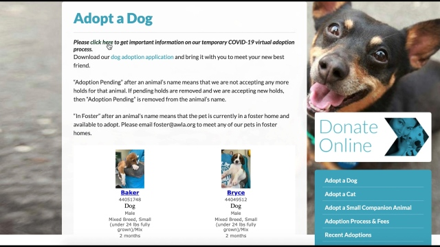 Animal Welfare League Of Arlington Launches Virtual Adoptions